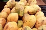 051 Wrights Bribie Fruit Shop for sale Call or SMS 0412 179 306