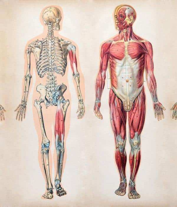 Anatomy_and_Physiology_720x@2x