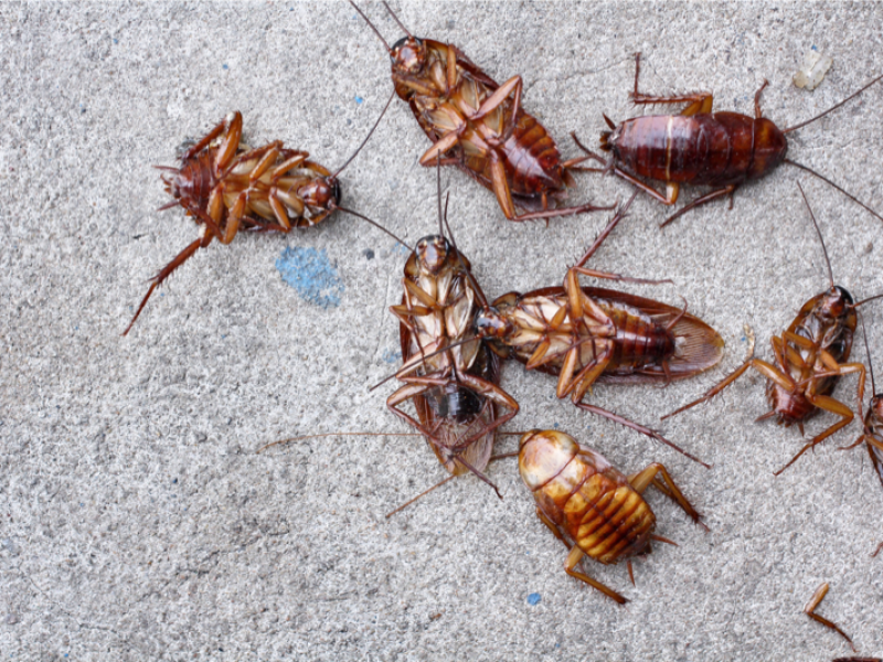 Pest control DP 005